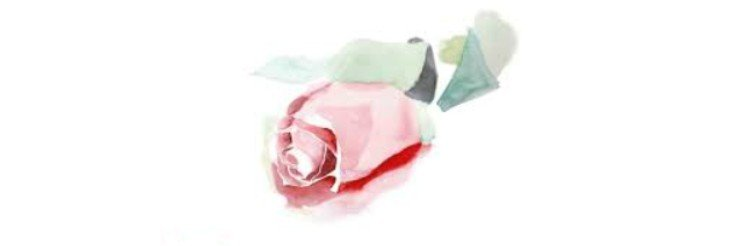 uma rosa aquarelada